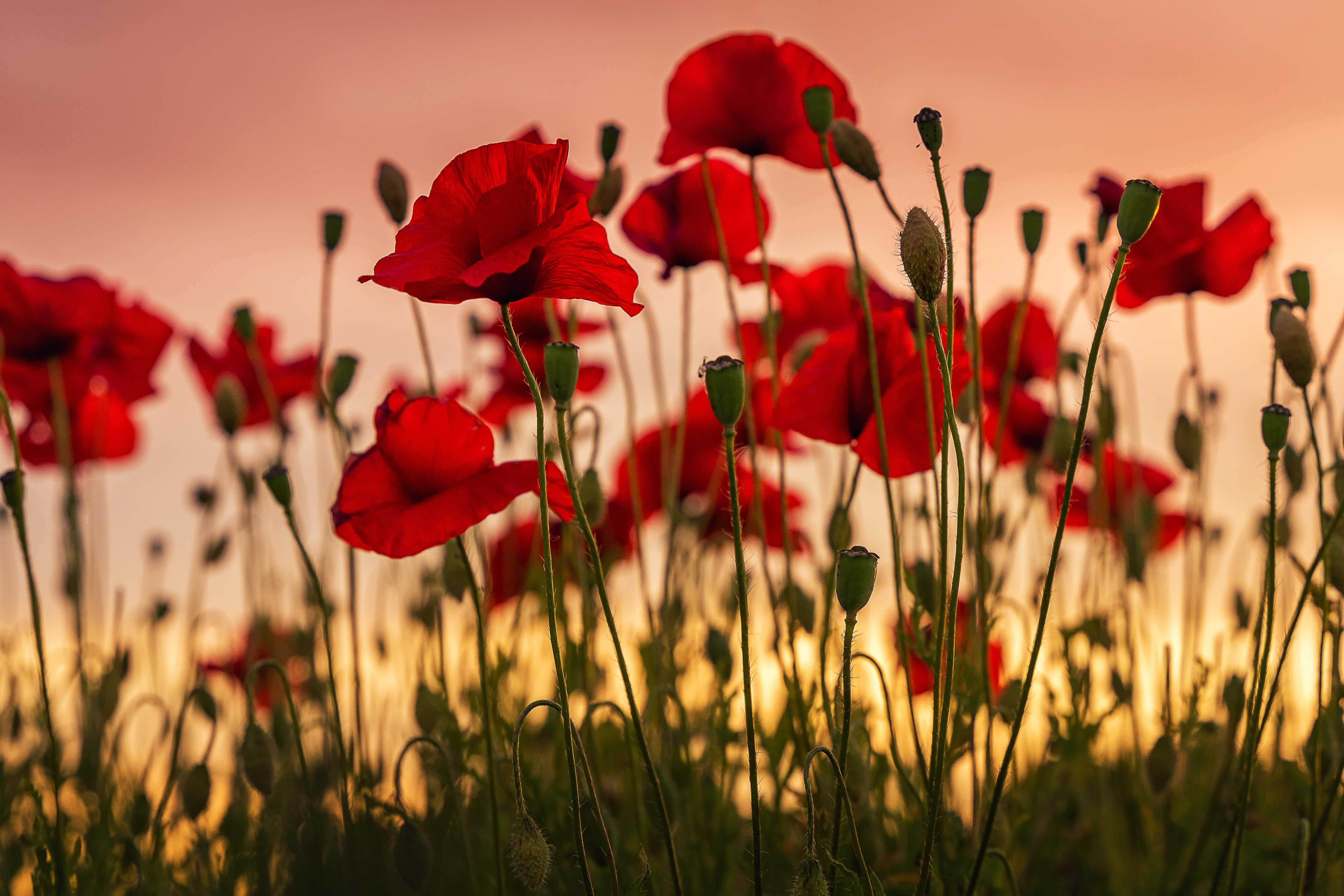 The Importance of Remembrance Day